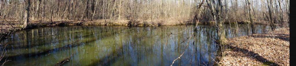 Vernal Pool Spring 2012